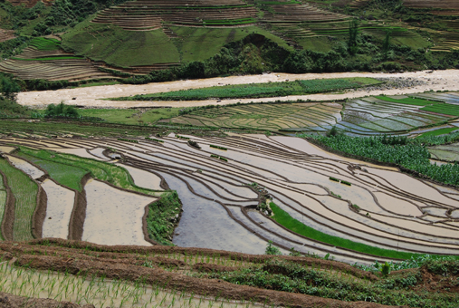 Paddy fields in Sapa, Vietnam